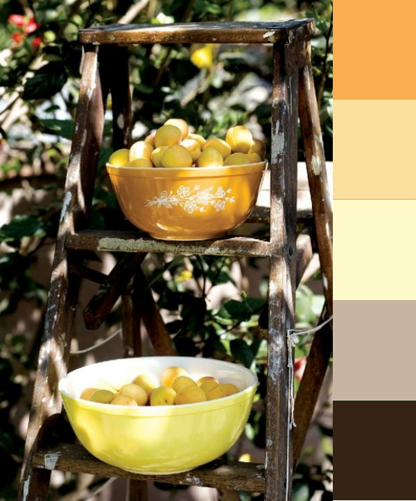 Daydream-In-Color-Color-Palette-Ladderful-Of-Apricots