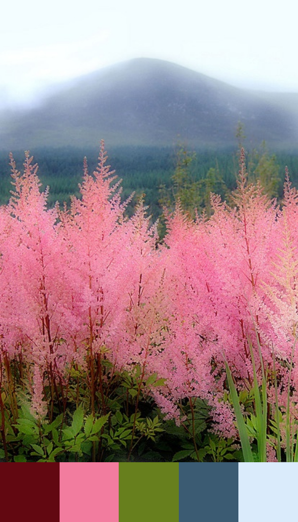 Daydream-In-Color-Bursts-Of-Pink