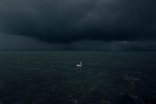 Daydream-In-Color-Wish-I-Was-Wednesday-Akos-Major-Waterscapes-Swan-In-The-Night