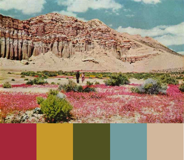 Daydream-In-Color-Color-Palette-Desert-Of-Flowers