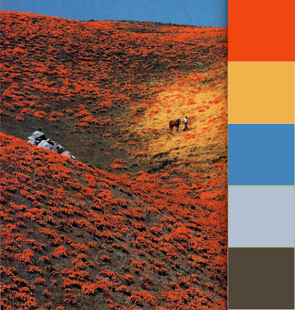 Daydream-In-Color-Color-Palette-Fields-Of-Orange